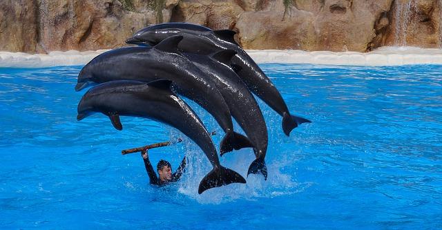 Visitar las Islas Canarias con niño